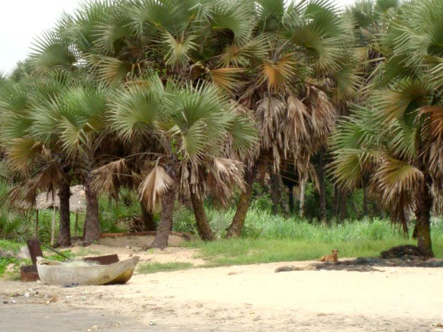 Futila Beach - Imagem 3