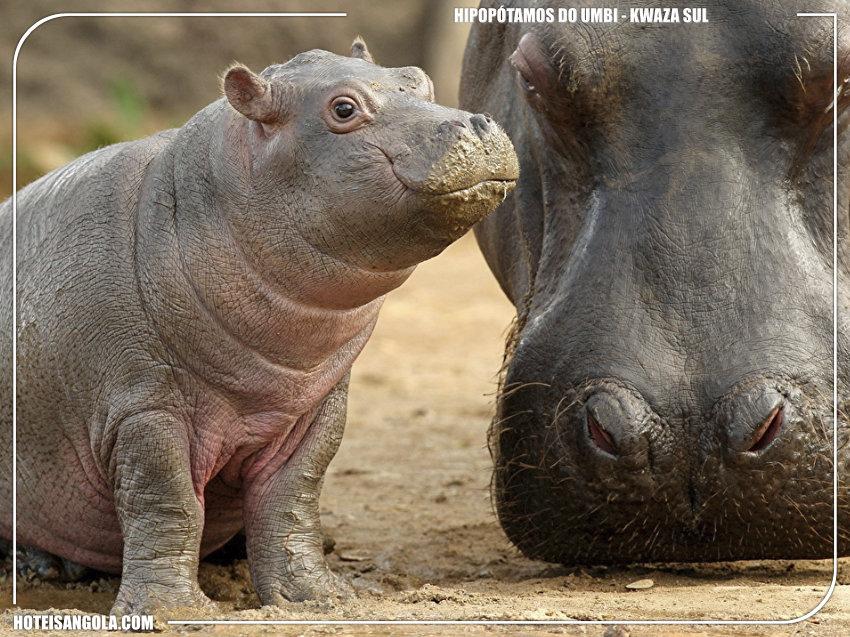 Hipopótamos do Umbi