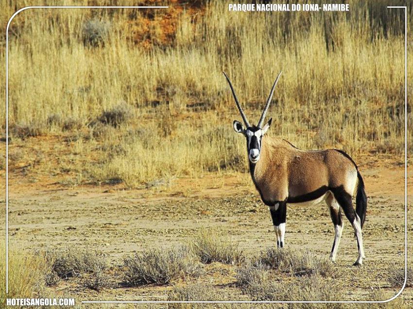 img: http://www.biodiversidade-angola.com/
