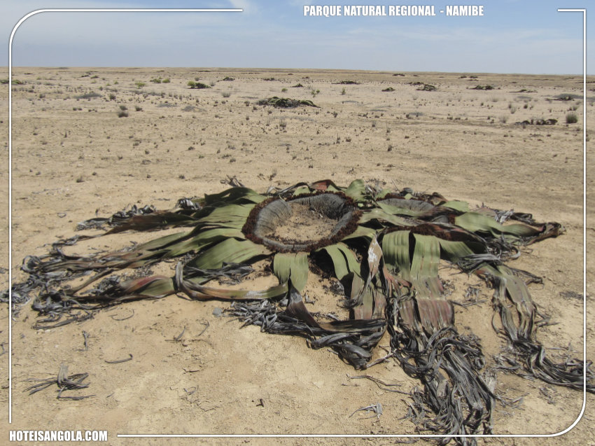 Regional Natural Park of Namibe