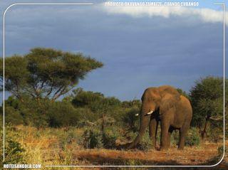 Okavango-Zambeze Project