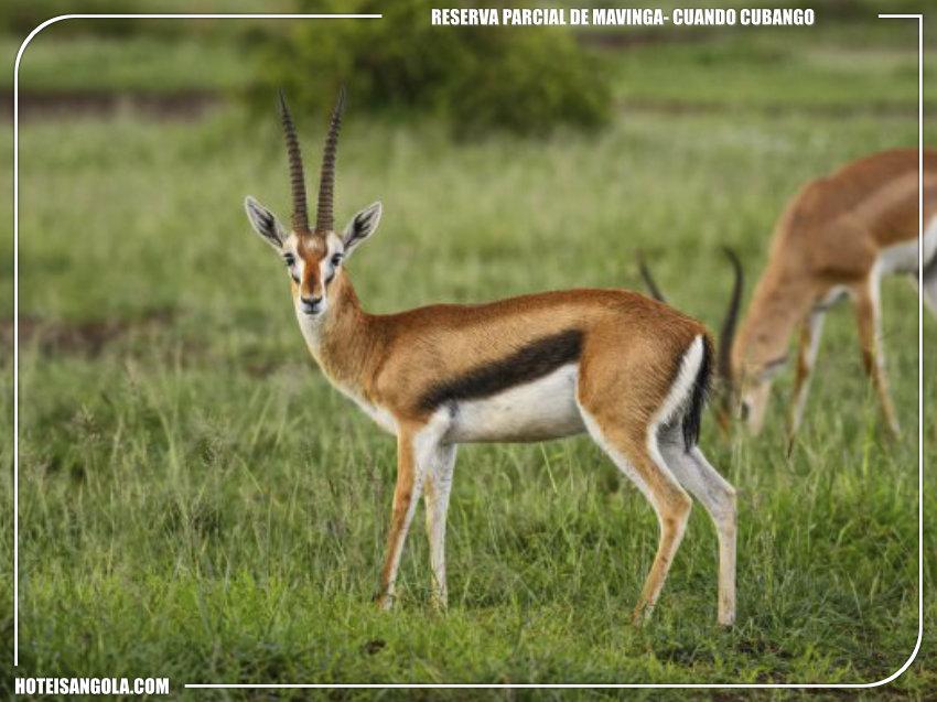 Partial Reserve of Mavinga
