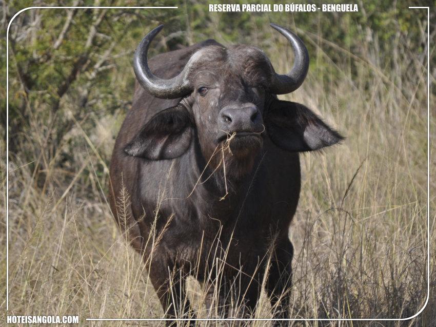 Reserva Parcial do Búfalo