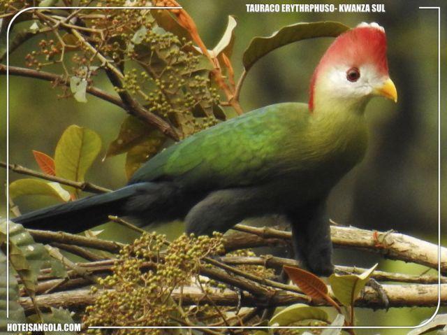Observação de Aves em Angola
