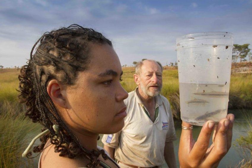 Identificadas mil espécies em Angola. 38 nem se sabia que lá existiam
