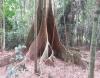 """Roteiro - Belize - """"A árvore das mil raízes até às barragens"""""""