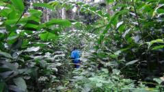"""Roteiro - Belize - """"Caminhada na Floresta em contacto com a Fauna e Flora"""""""