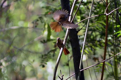 Abundância de pássaros raros abre portas para avituristas