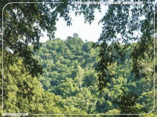 Reserva florestal do Golungo Alto